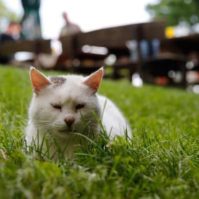 Erlebnis-Bauernhof mit Tieren für Kinder in Kärnten