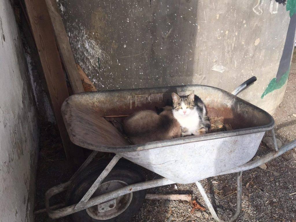 Katzen füttern am Bauernhof