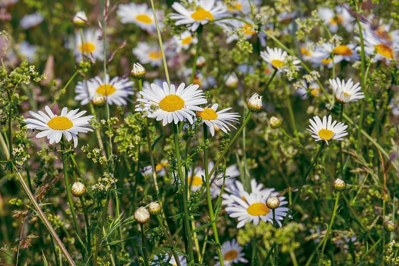 Bauernhofurlaub für Kinder im Frühling