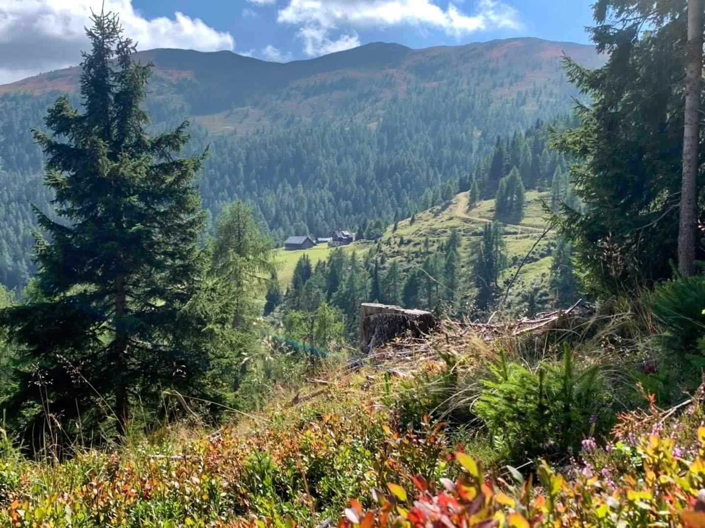 Herbst in Gmünd: Zeit für einen Besuch auf der Alm!